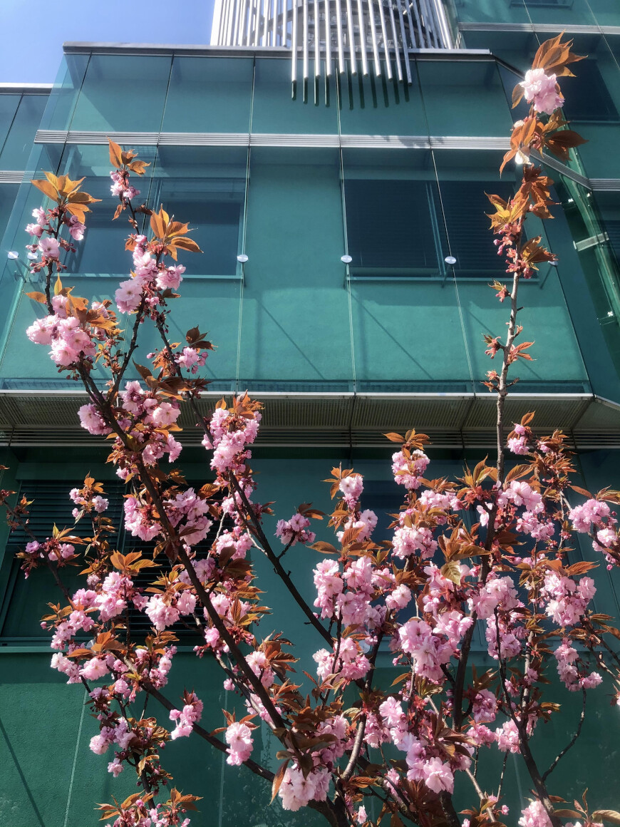 Razkošje pomladi pod našimi okni
